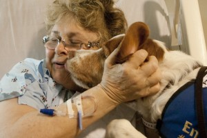 therapy-dog-hospital-patient-1024x682